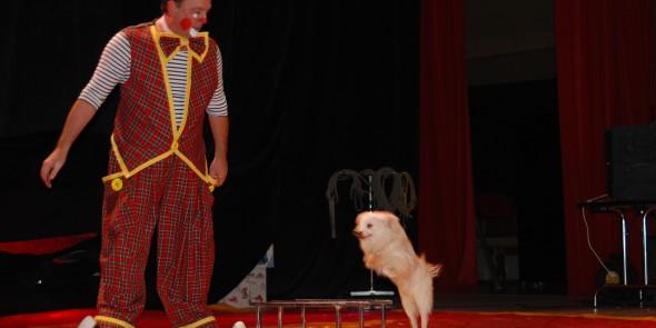 Spectacle noel cirque en salle cirque event