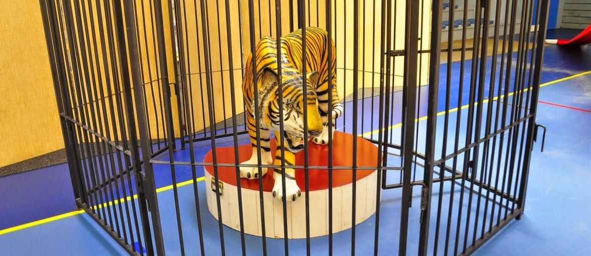 cirque event location cage animaux fauves tigre