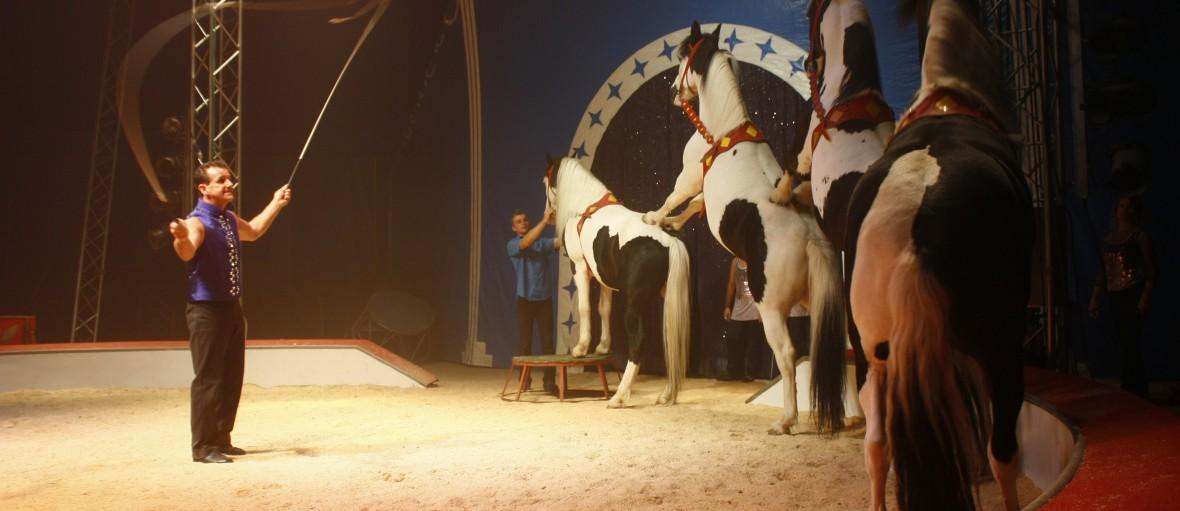 cirque noel prive alstom chapiteau entreprise cirque